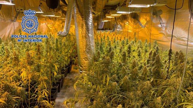 28 detenidos en Madrid, Castellón y Valencia y desarticulada una organización de suministro de planteles de marihuana